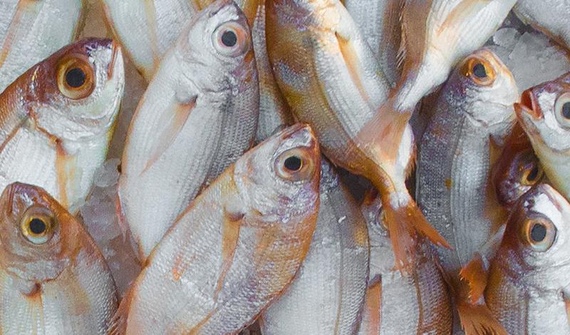 Fish & Formalin